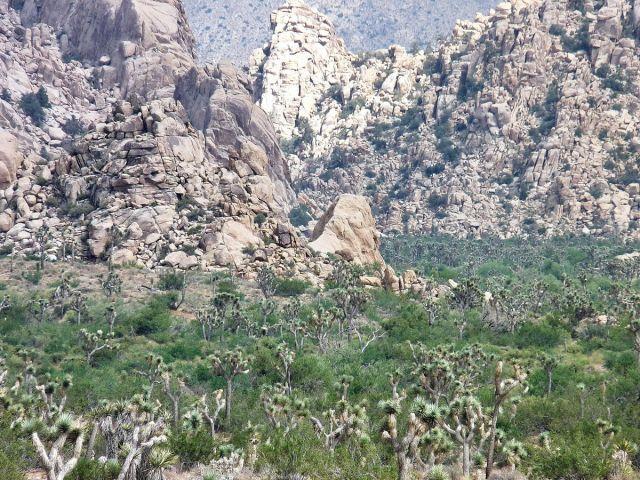 Zdjęcia: Joshua Tree NP, California, Skały na zielonej pustyni, USA
