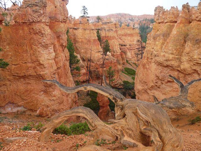 Zdjęcia: Bryce Canyon NP, Utah, Marsjański krajobraz, USA