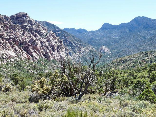 Zdjęcia: Red Rock Canyon NP, Nevada, Wędrówka po Red Rock Canyon, USA