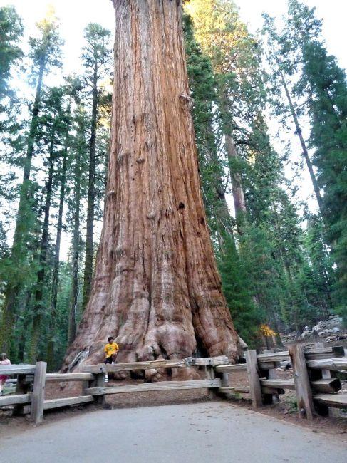Zdjęcia: Sequoia NP, California, Na prawdę grube drzewo - Sherman Tree , USA