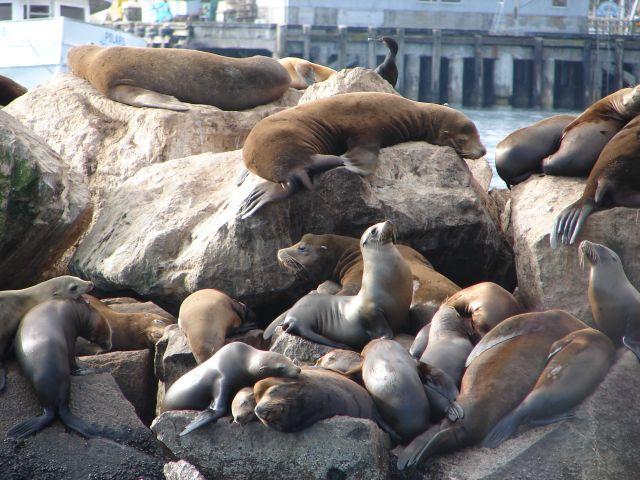 Zdjęcia: Monterey, Kalifornia, Odpoczynek, USA