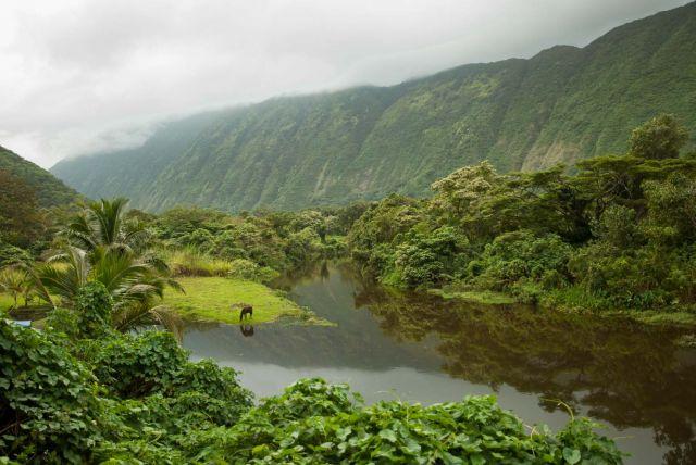 Zdjęcia: Big Island, Hawaje, WAIPI'O VALLEY, USA