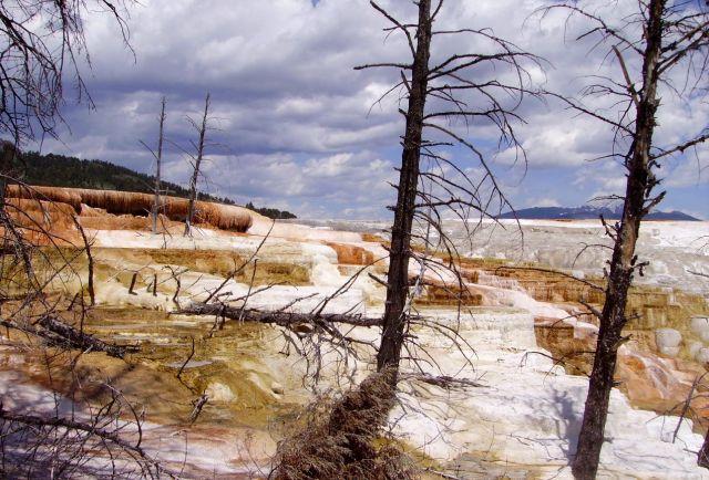Zdjęcia: Yelowstone Nat.Park, Wyoming, uwięzione .... w Mammoth Hot Springs, USA