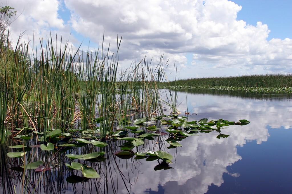 Zdjęcia: Everglades, Floryda, Everglades National Park, USA