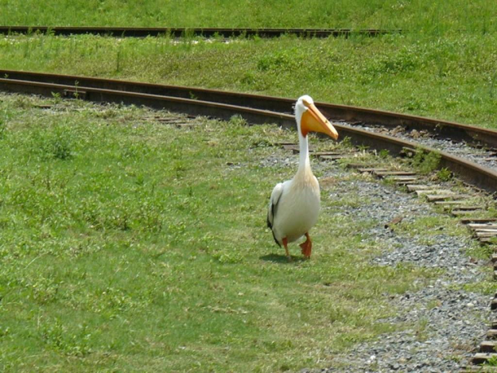 Zdjęcia: Busch Gardens, Tampa, Nie odjeżdzaj ... :-), USA