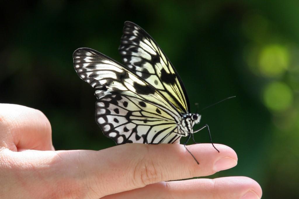 Zdjęcia: Butterfly World, Floryda, Motylek, USA
