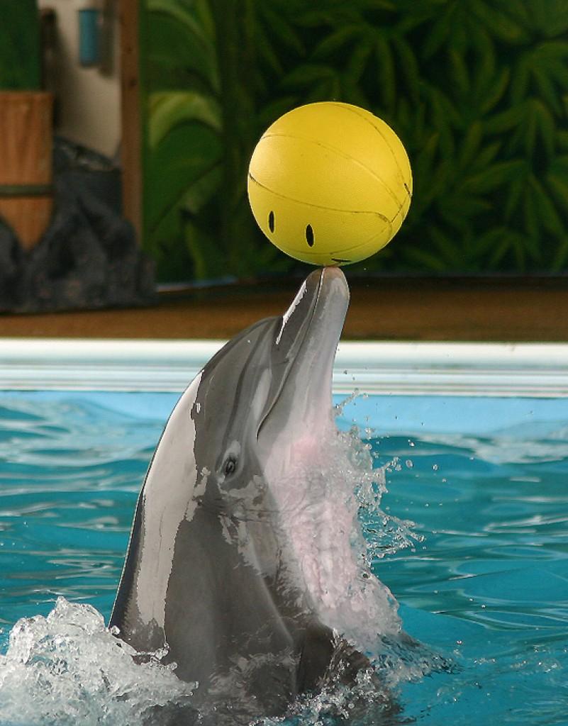 Zdjęcia: Floryda, Floryda, Delfin, USA