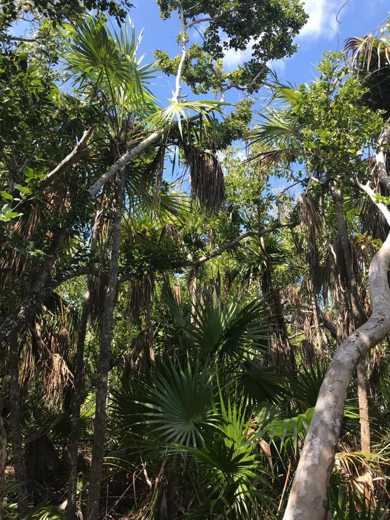 Zdjęcia: Long Key , Florida Keys, long key state park, USA