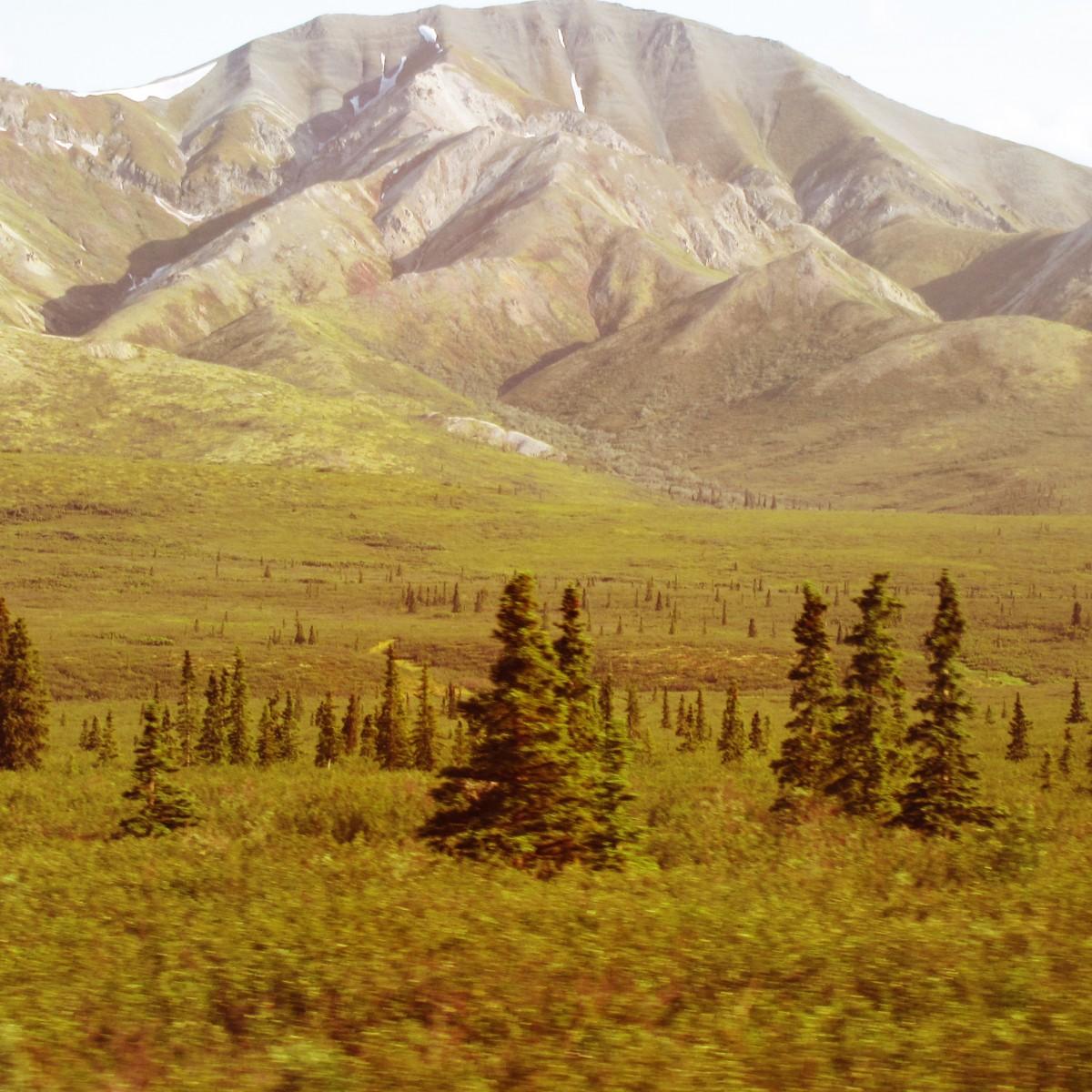Zdjęcia: Alaska, Alaska, Denali, USA
