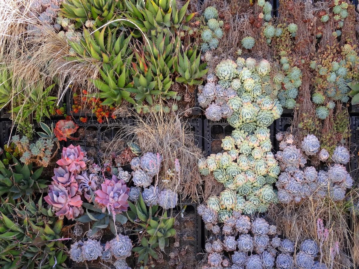 Zdjęcia: Los Angeles, Szalona część Kalifornii, Pionowy ogród kwiatowy, USA