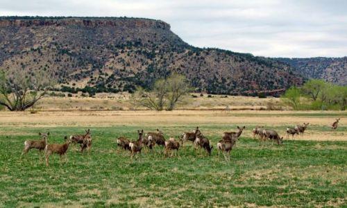USA / - / Oklahoma / Black Mesa State Park / sarenki na pastwisku