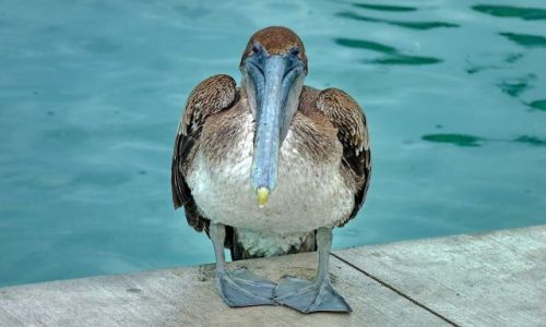 Zdjecie USA / Floryda / Key West / Ciekawski ptak
