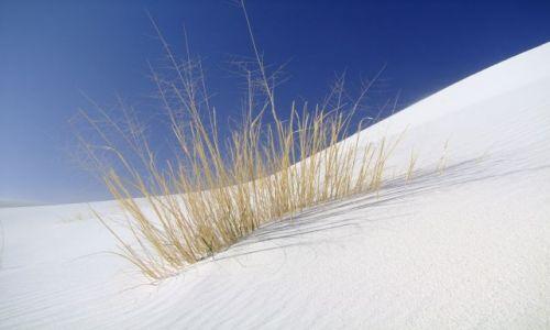 Zdjecie USA / - / Nowy Meksyk / White Sands / dzielna trawka