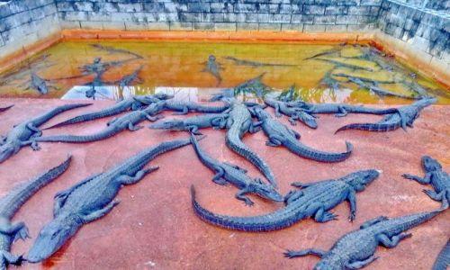 Zdjecie USA / Floryda / Homested - Everglades Aligator Farm / W aligatorni