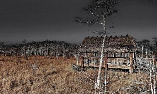 Zdjecie USA / Floryda / Everglades National Park / Everglades wieczorną porą