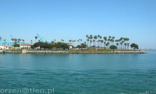 Zdjęcie USA / california / los angeles / palemki