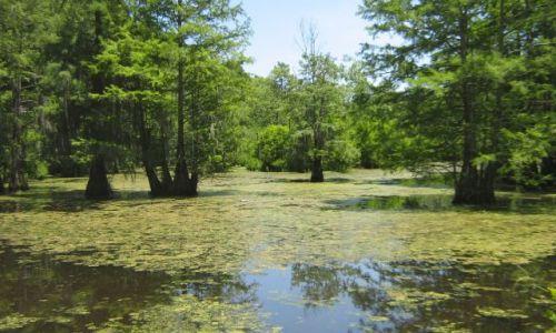 Zdjęcie USA / Mississippi / Mule Jail Lake / bagna