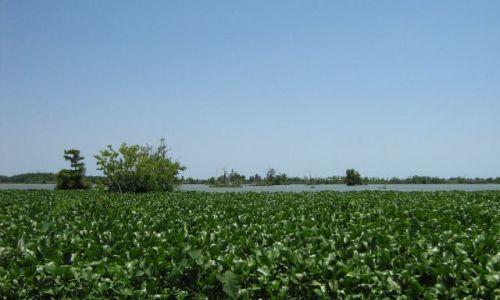 USA / Luizjana / na południe od Venice / rozlewiska