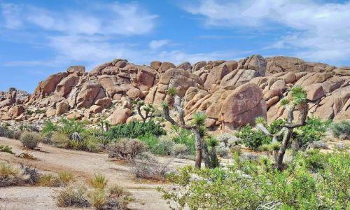 Zdjęcie USA / California / Joshua Tree NP / Kaktusy Jezuego wśród samotnych skał
