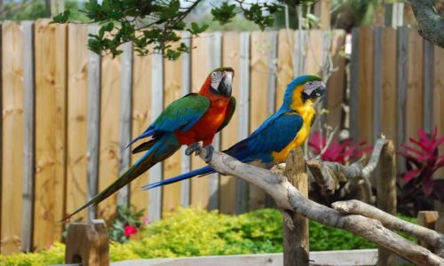 Zdjecie USA / Florida / Orlando / Dumne papugi