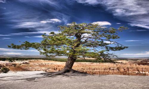 Zdjecie USA / Utah / Bryce Canyon / Życie