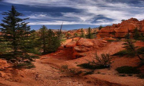 Zdjecie USA / Utah / Bryce Canyon / Bryce Canyon