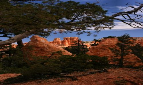 Zdjęcie USA / Utah / USA / Bryce Canyon