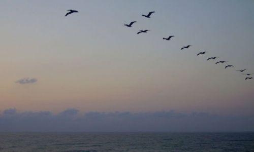 Zdjęcie USA / North Carolina / Outer Banks / klucz ptaków o poranku