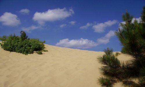 Zdjęcie USA / North Carolina / Outer Banks / w Parku Stanowym Jockey,s Ridge
