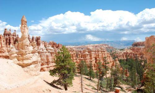 Zdjecie USA / Utah / Bryce Canyon / Canyon