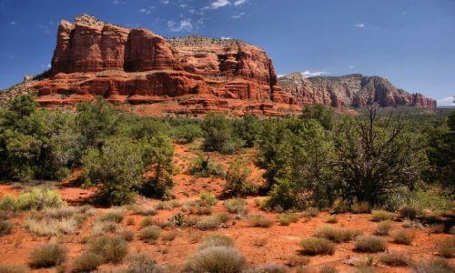Zdjecie USA / Arizona / Sedona / Okolice miasteczka Sedona
