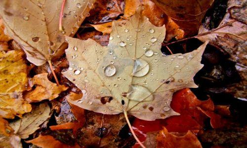 Zdjęcie USA / - / minnesota / tak, to juz jesien