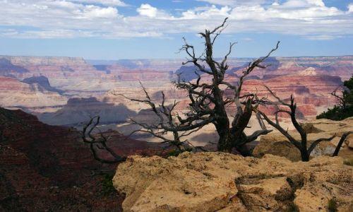 Zdjęcie USA / Arizona / Grand Canyon / Suchotnik nad kanionem