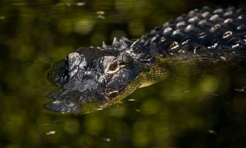USA / Floryda / Everglades / Park Narodowy Everglades