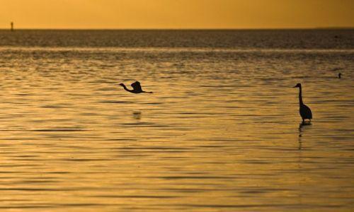 USA / Floryda / Everglades / Park Narodowy Dry Tortugas