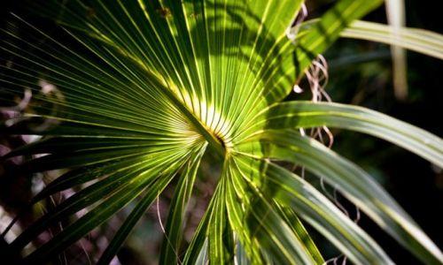 USA / Floryda / Park Narodowy Everglades / Na szlaku Mahogany Hammock