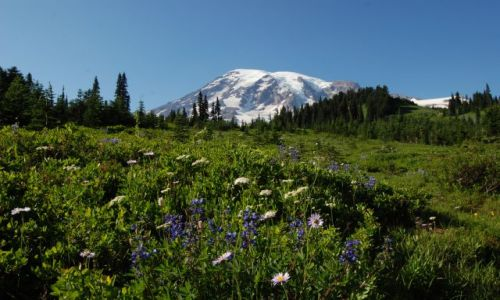 USA / Washington / Mount Rainier / Paradise