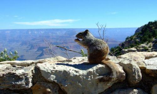 Zdjecie USA / Arizona / Wielki Kanion Rzeki Kolorado / wiewiórka nad kanionem