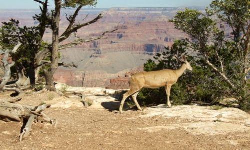Zdjecie USA / Arizona / Wielki Kanion Kolorado / spacer nad kanionem
