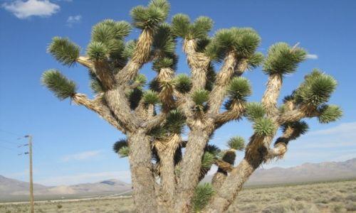 Zdjecie USA / - / California  / Krajobraz pustynny  -  Kalifornia