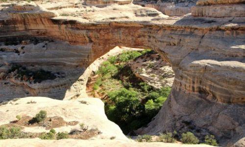 Zdjecie USA / - / Utah / Natural Bridges NM / Kachina Bridge