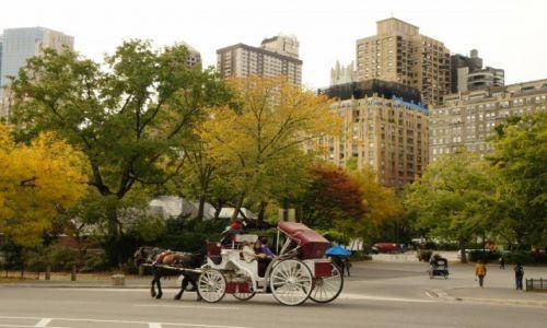 Zdjęcie USA / Nowy Jork / Central Park / Jesień w  Parku Centralnym