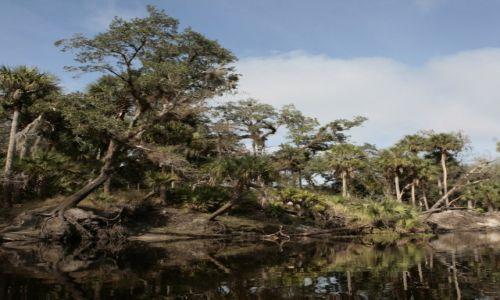 USA / Floryda / Econlockhatchee River (Econ River). / Lazy River Tour. Czyli spływ z aligatorami.