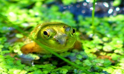 Zdjęcie USA / Michigan  / Kalamazoo / żabka z uśmiechem