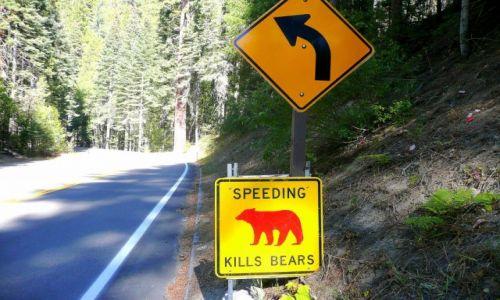 Zdjęcie USA / California / Yosemite / Uwaga na niedźwiedzie