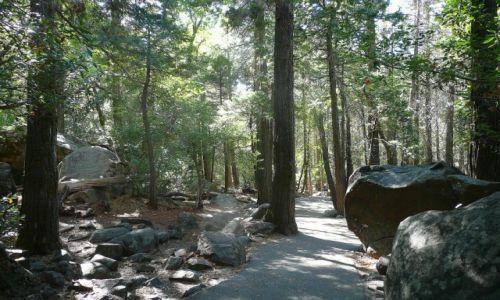 Zdjęcie USA / California / Yosemite / śieżka w parku