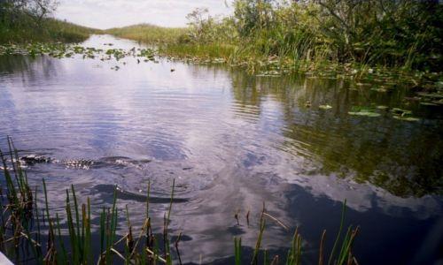 Zdjecie USA / Floryda  / Park Narodowy Everglades / Spotkanie z aligatorem