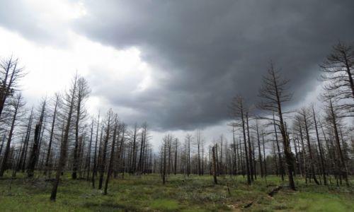 Zdjecie USA / Arizona / Kaibab National Forest / KONKURS Kaibab National Forest