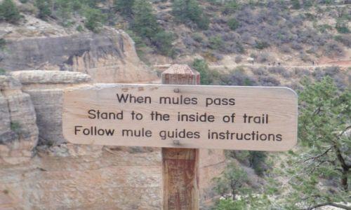 Zdjecie USA / Wielki Kanion / Arizona / Wielki Kanion