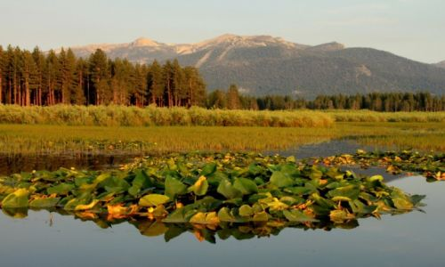 Zdjecie USA / California / Meddow/South Lake Tahoe / Oaza spokoju